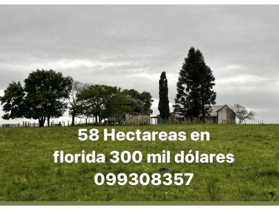 58 Hectareas En Florida 300 Mil Dólares 099308357