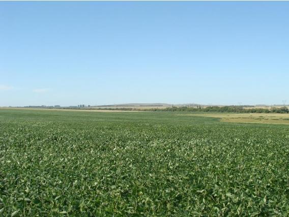 Campo agricola en Colonia de 640 hectareas