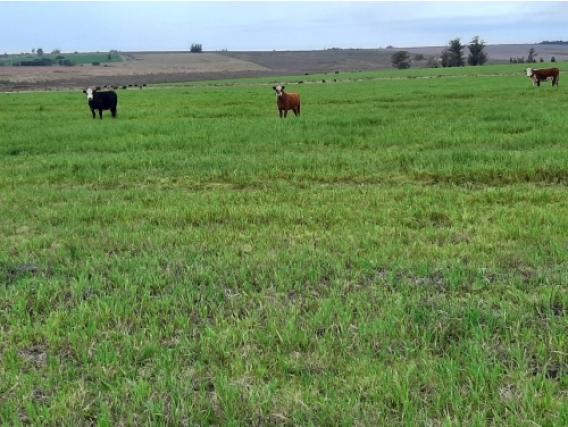 Campo de 110 hectareas en Parada Dayman