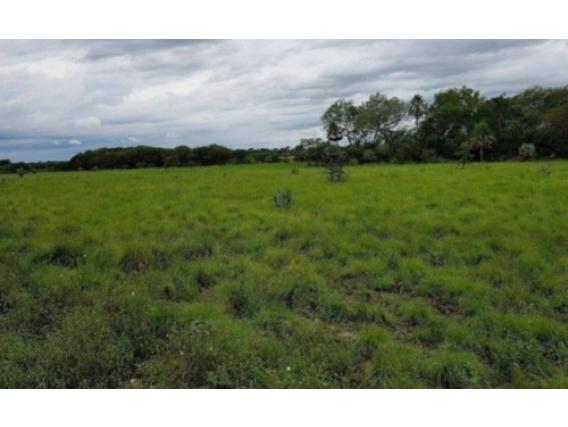 Campo de 137 hectareas en Santa Rosa