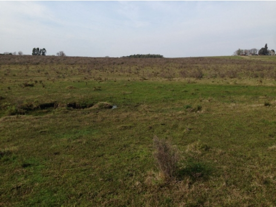Campo De 26 Hectareas En Canelones