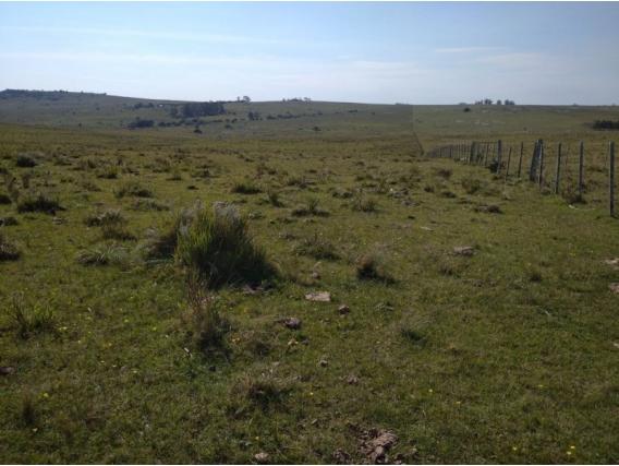 Campo De 36 Hectareas En Maldonado