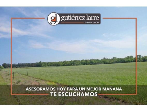 Campo 235 Ha, Rincón Del Pino, Precio Conveniente