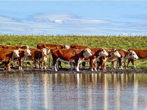 Campo Agrícola Ganadero En Durazno Ref. 5809