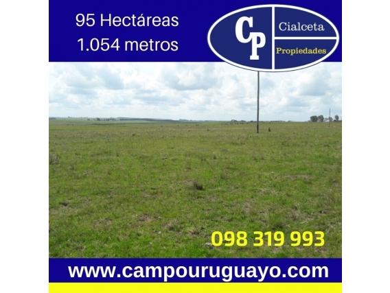 Campo De 95 Hectareas En Lavalleja