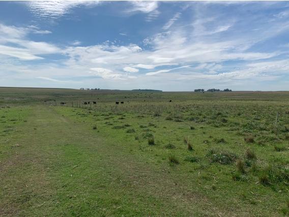 Campo En Venta En Durazno Ref. 3822